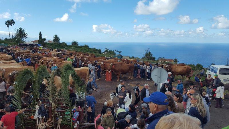 Viehmarkt an San Antonio de Abad