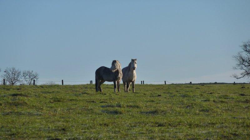 Ponies in the field behind us.