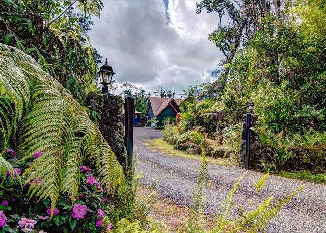 Volcano Dancing Ferns Driveway.