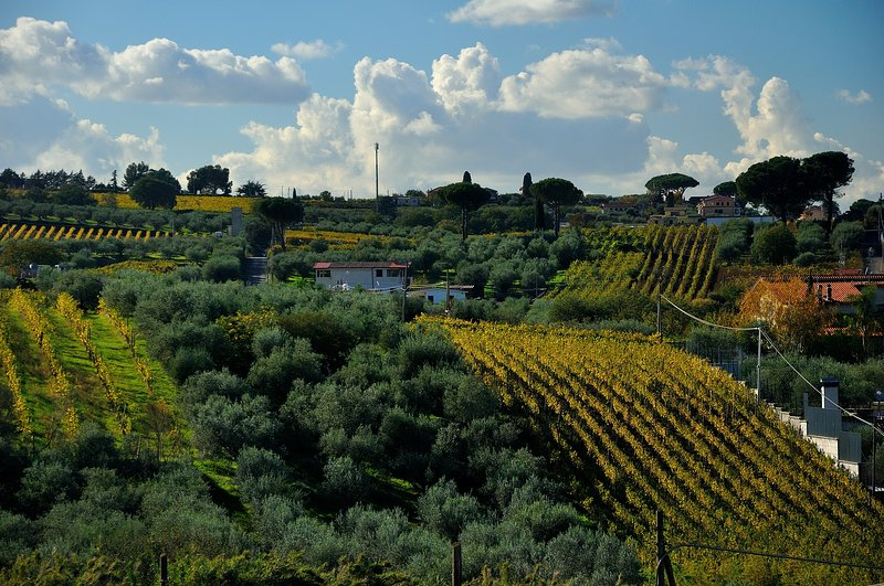 Comfortable and confidential, B & B Colle Mattia is surrounded by peaceful vineyards and olive groves