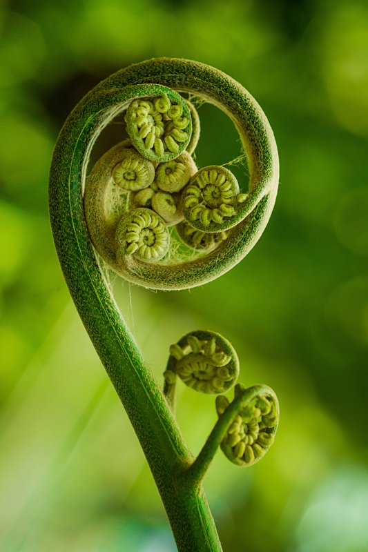 Watch a fern grow