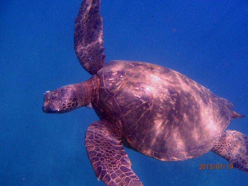 close encounter with a turtle