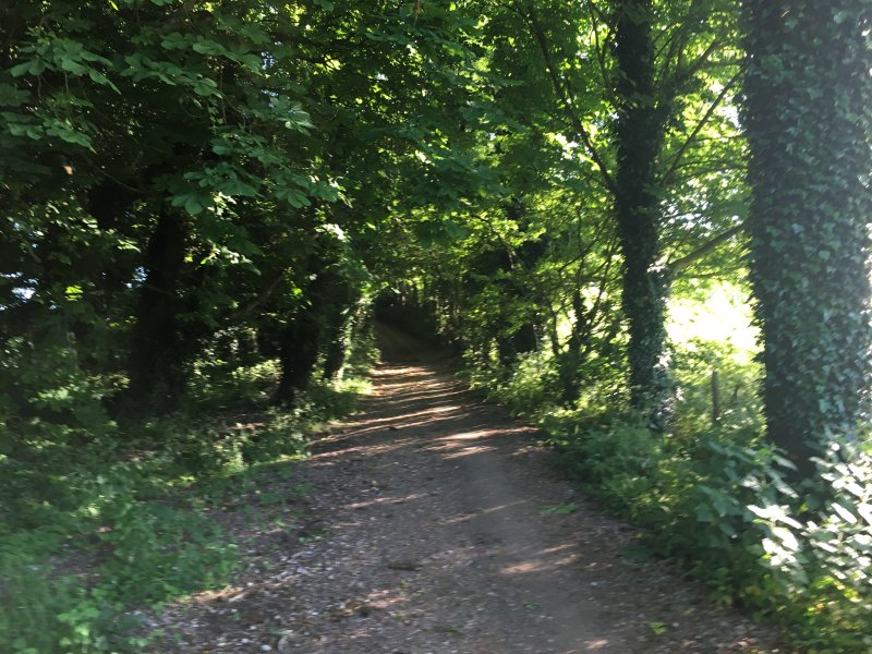 Walk along Green Lane minutes from Coach House