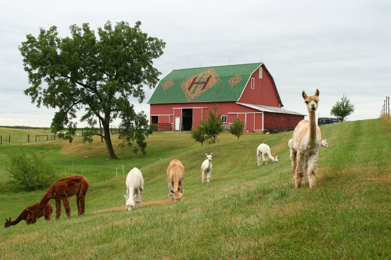 Charming Rural Farmhouse on a Working Alpaca Farm, holiday rental in Young America
