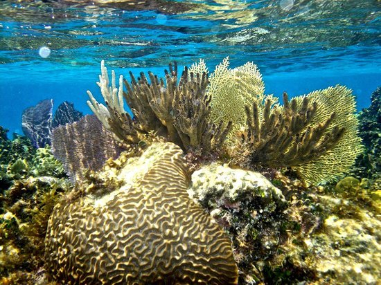 book a snorkeling excursion