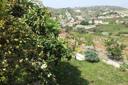 Vista de la parte trasera de la casa (Vista desde la parte trasera de la casa)