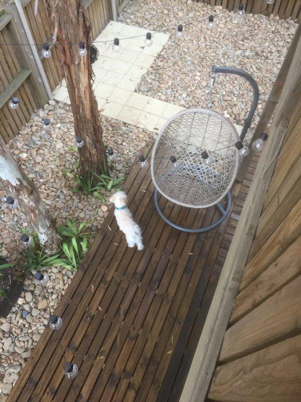 Vista desde el balcón al patio trasero perros