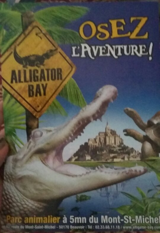 Alligator Bay A Brilliant Family Day Out