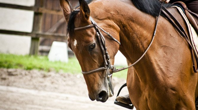 Horse riding: horses and ponneys