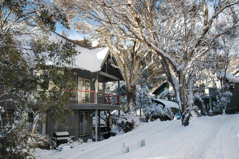 Milkwood dans la neige
