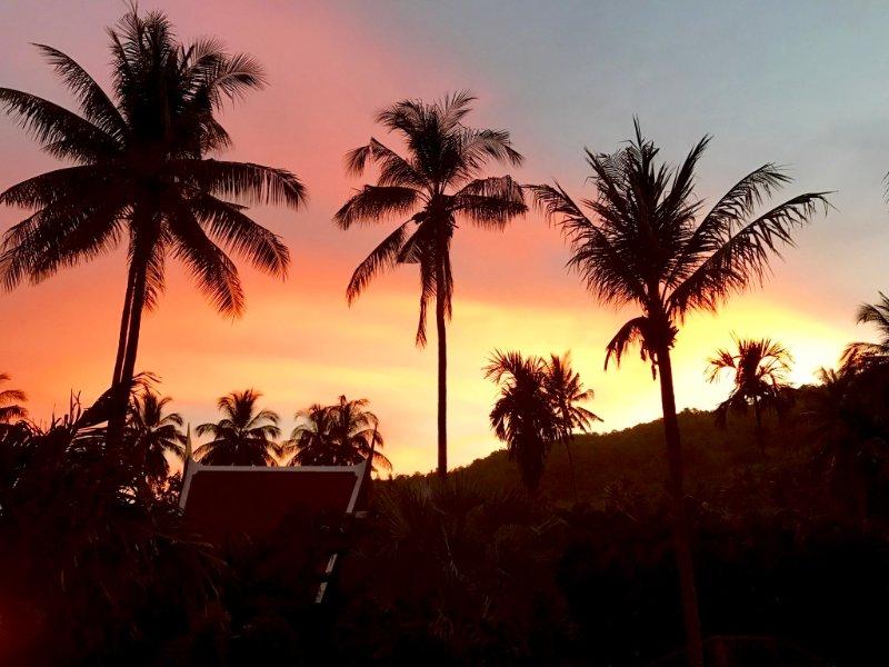 panorama mozzafiato di palme e cresta collina si staglia contro il tramonto di sera