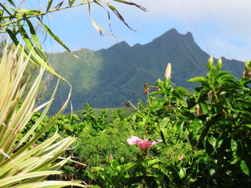 Heron's Reef Bougainvillea Studio, vacation rental in Matavera