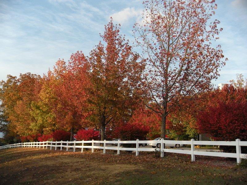 Venez visiter Branson à l'automne et de voir l'affichage incroyable de couleurs automnales