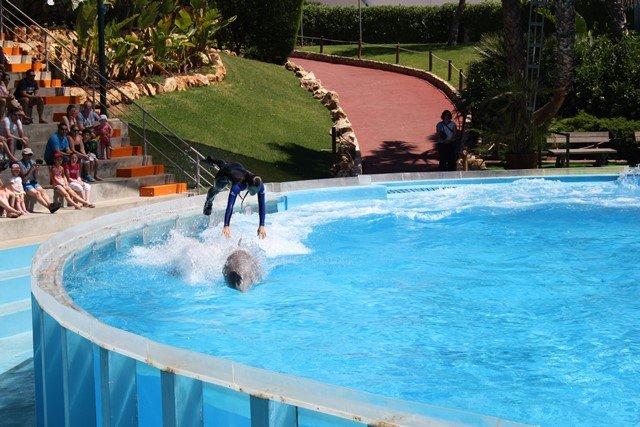 Demostración del delfín Zoomarine
