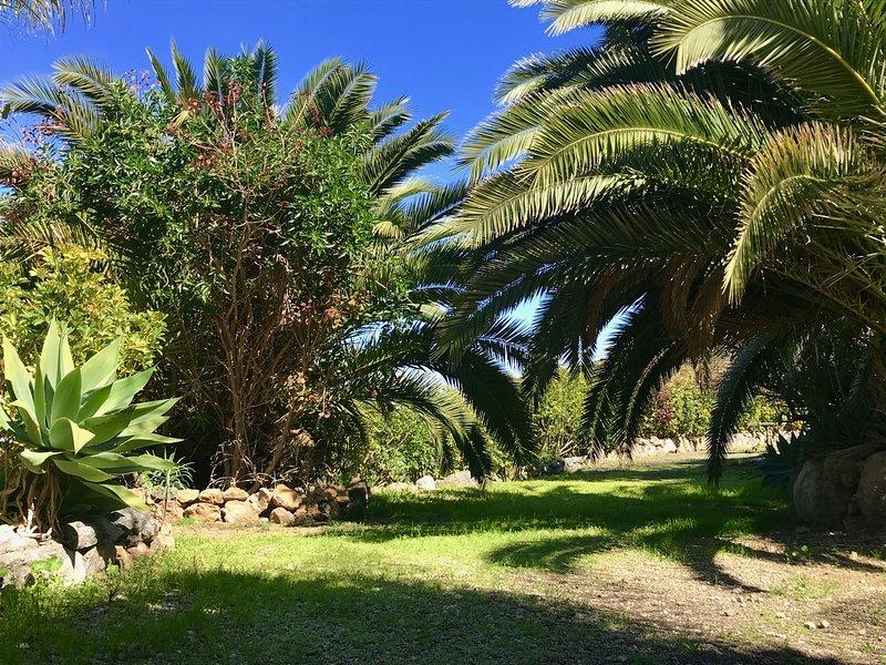 Garten mit tropischen und exotischen Pflanzen.