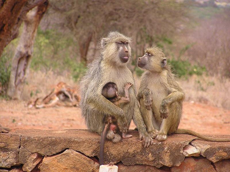 Imágenes de un safari