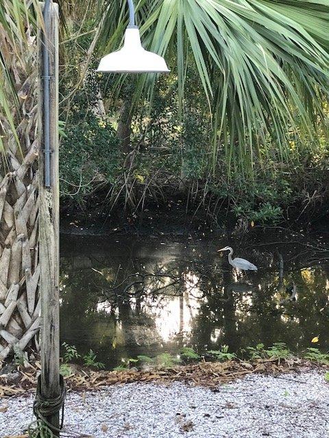 Die Natur ist überall in Hülle und Fülle ... großartige Vogelbeobachtung