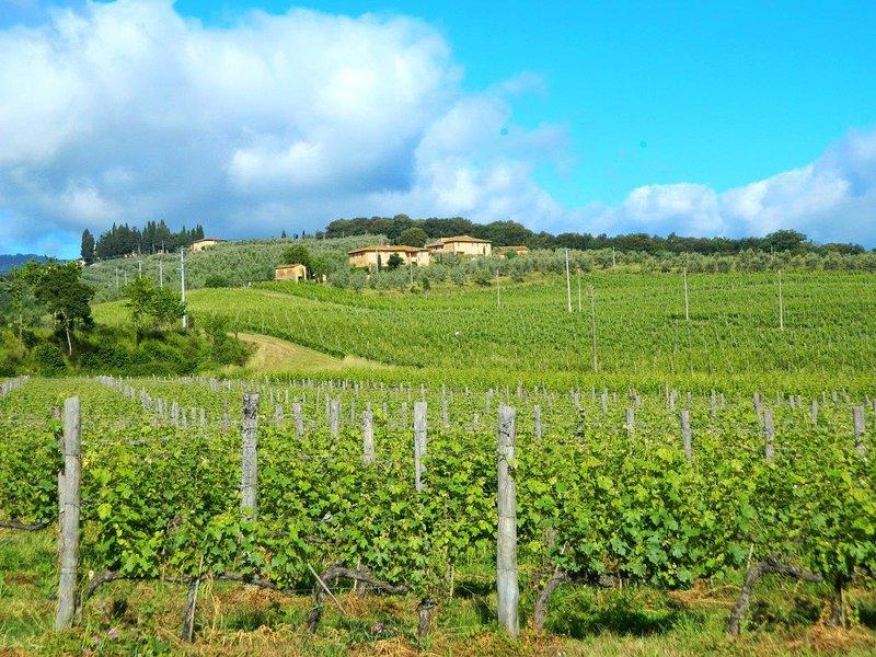 Vigna, Petrolo winery. Quiet countryside, garden, swimming-pool, wi-fi., alquiler de vacaciones en Bucine