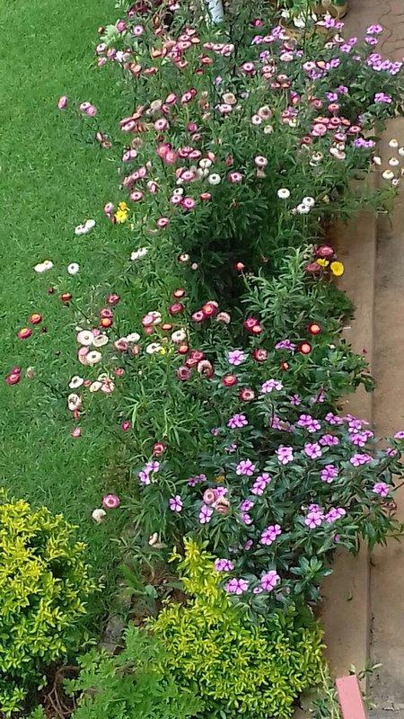 Extérieur de la maison : jardin fleuri