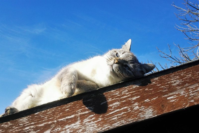 Strawberry, the old cat, showing you how to relax at Can Torras!