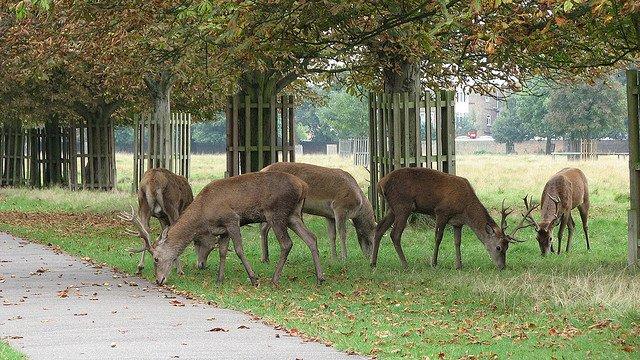 Royal Bushy Park - approx 0.7 mile