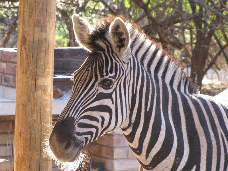 Bush Cottage - Marloth Park, Kruger Park, holiday rental in Komatipoort