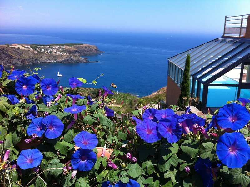 Nice studio with sea view & terrace, holiday rental in Cerbere