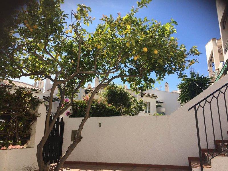 O Lemon Tree