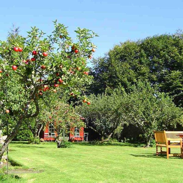Une partie du jardin qui est disponible