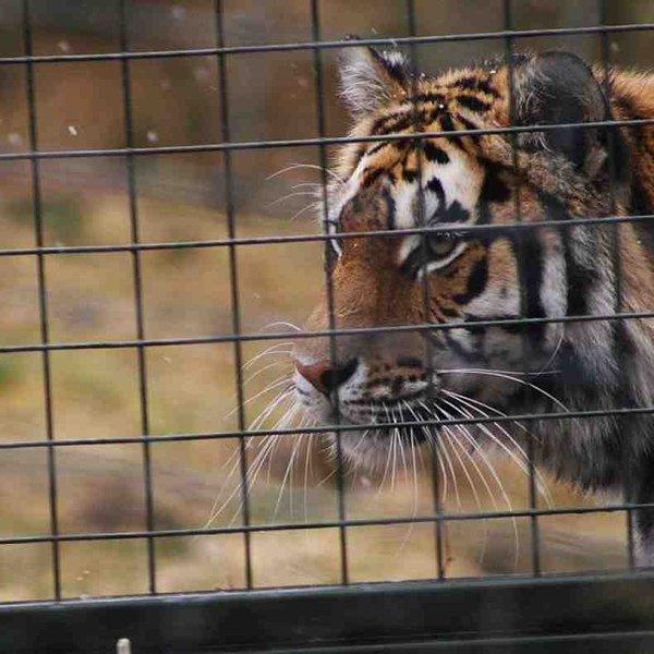 Levar a família para o Parque Highland Wildlife at Kingussie