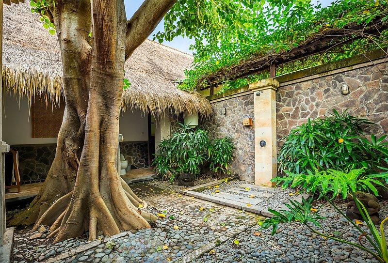 Outdoor badkamer met een grote oude boom