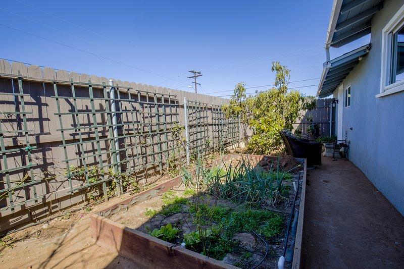 Patio privado con bayas que crecen a lo largo de la cerca, 2 árboles de aguacate, durazno, maracuyá y huerto vegetal.