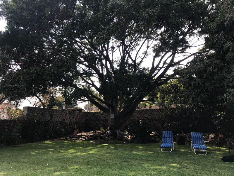 Shade tree and meditation
