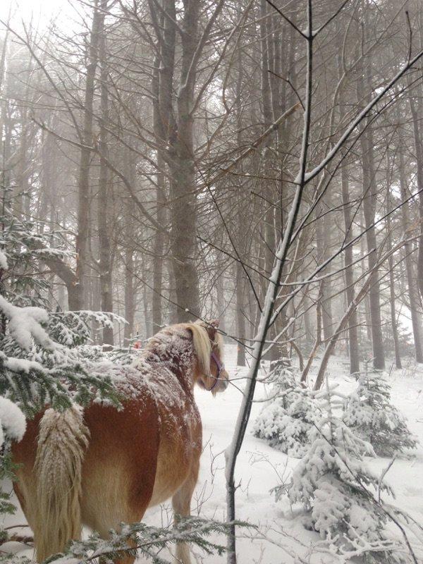 nuestros bosques durante una tormenta de nieve.