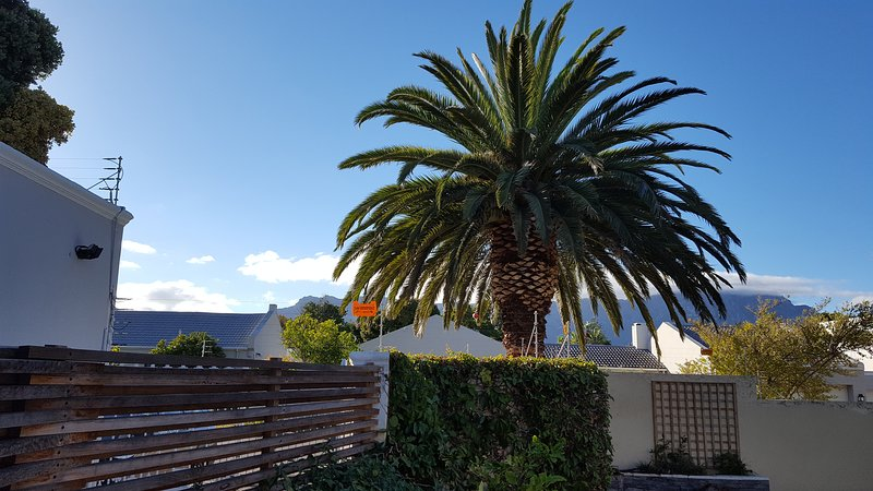Cottage Chenin - Outside Palm Tree on the road