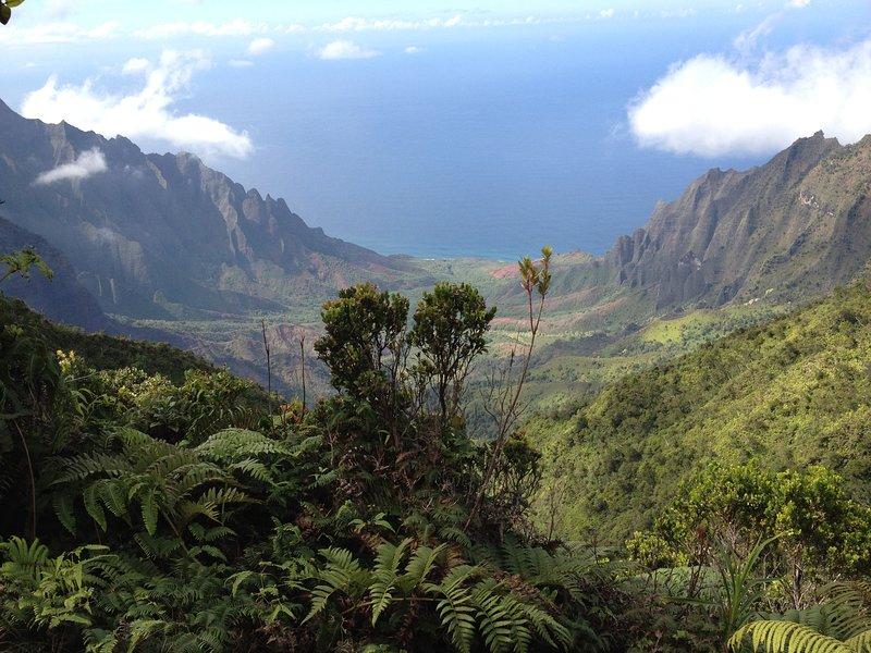 Kokee State Park est ce Kauai