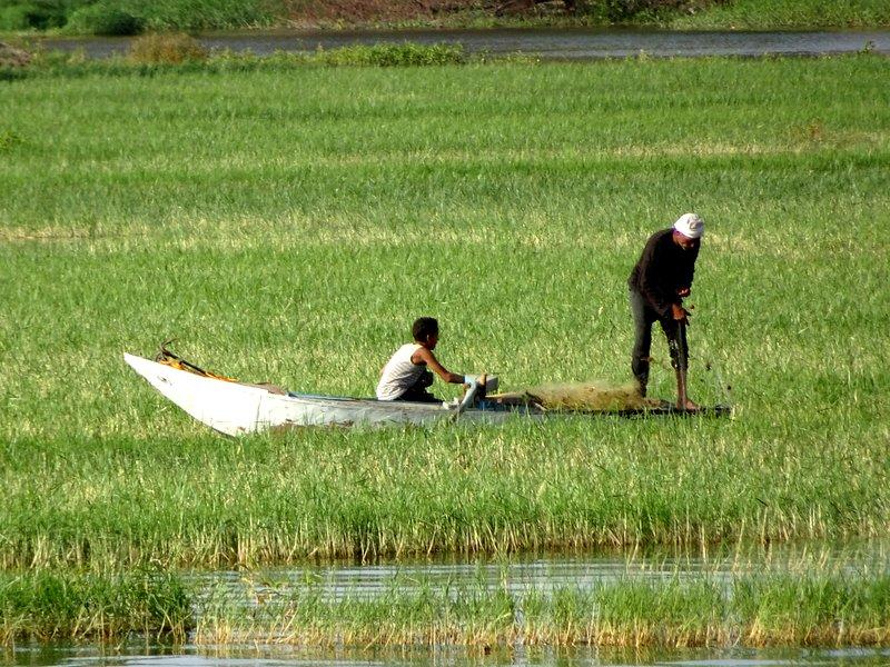Des pêcheurs en activité dans les eaux fertiles du Nil