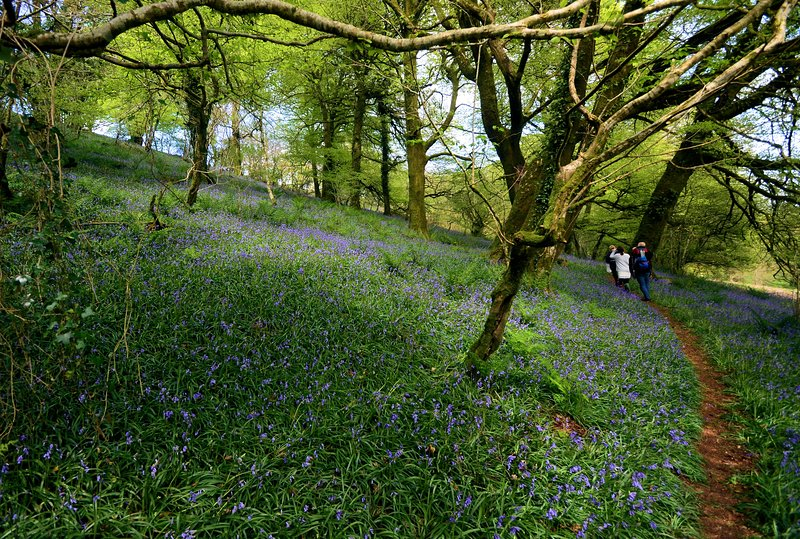 A nearby woodland walk in Spring