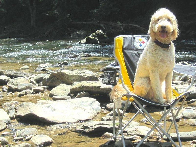 Hunde lieben es, auf dem Fluss zu spielen und zu chillen