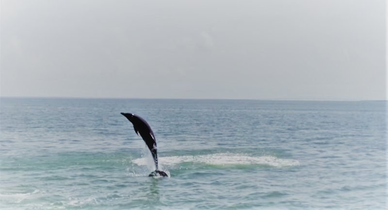 We almost always see dolphins while on the island.