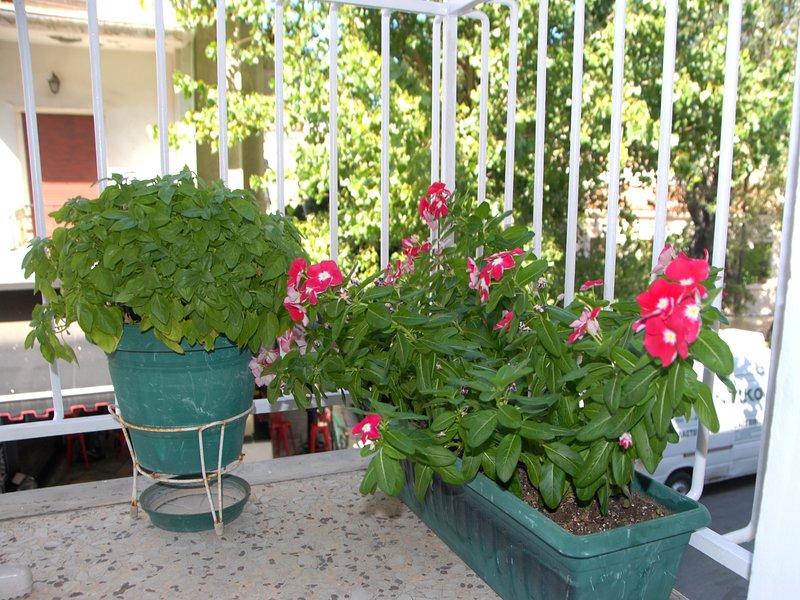 Minhas plantas no balkony frint.