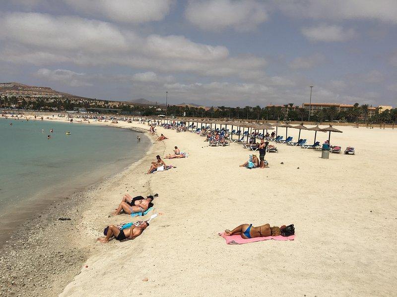Local beau hêtre sable