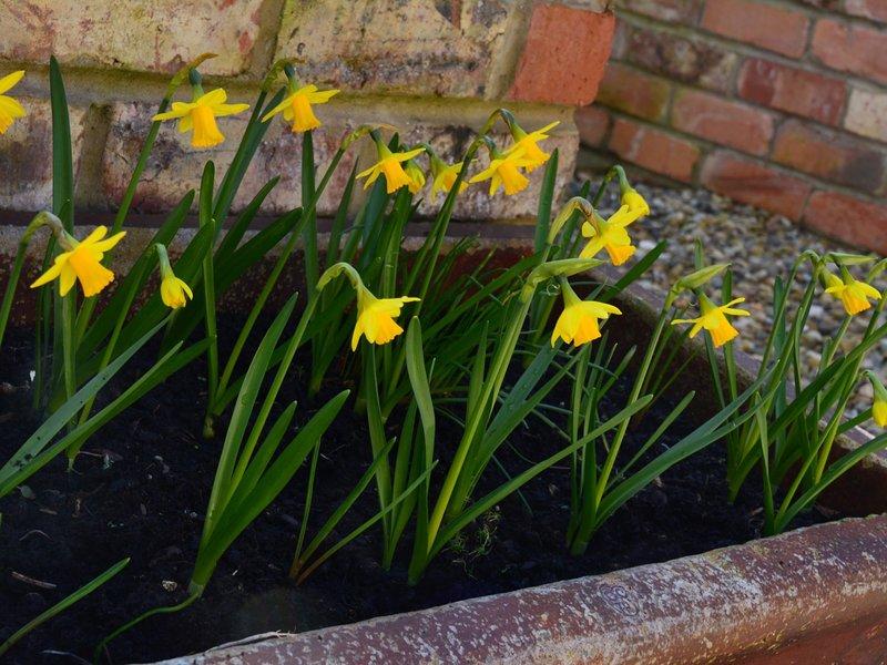 Primavera nel cortile