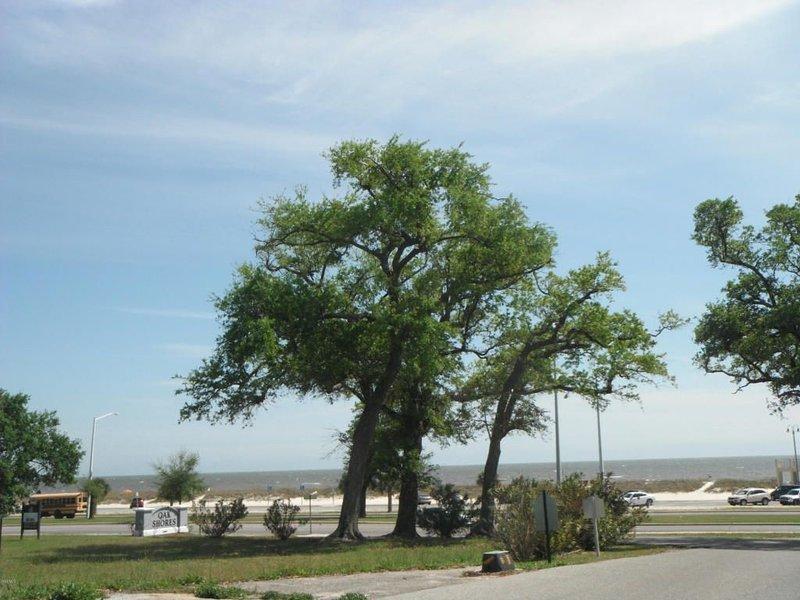 Oak Shores 138