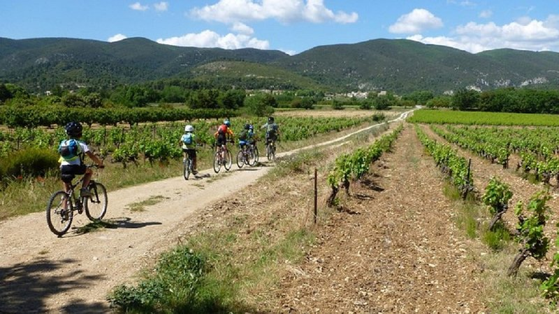 Cycling in the vineyards