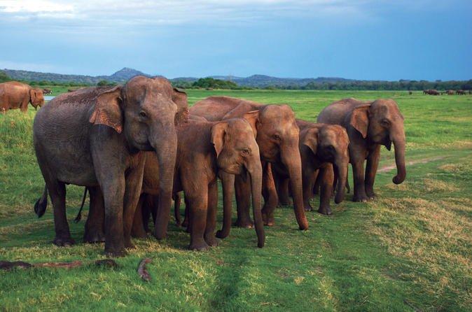 Massive elephant