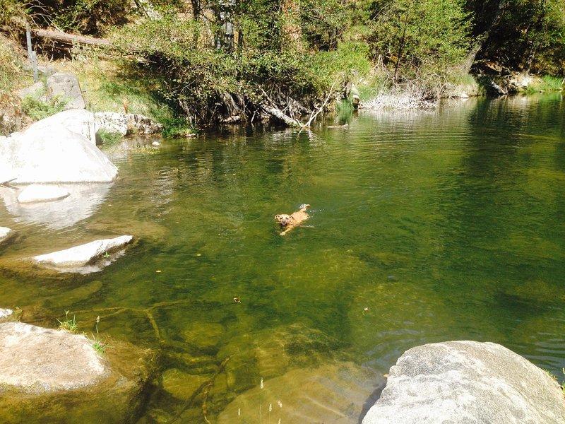 trou de natation