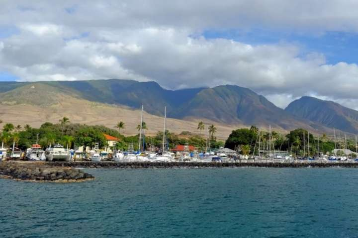 Walk to the Lahaina Harbor in Lahaina Town