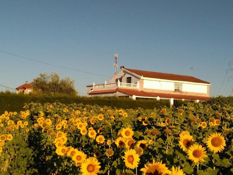 Casa los Girasoles, holiday rental in La Rambla