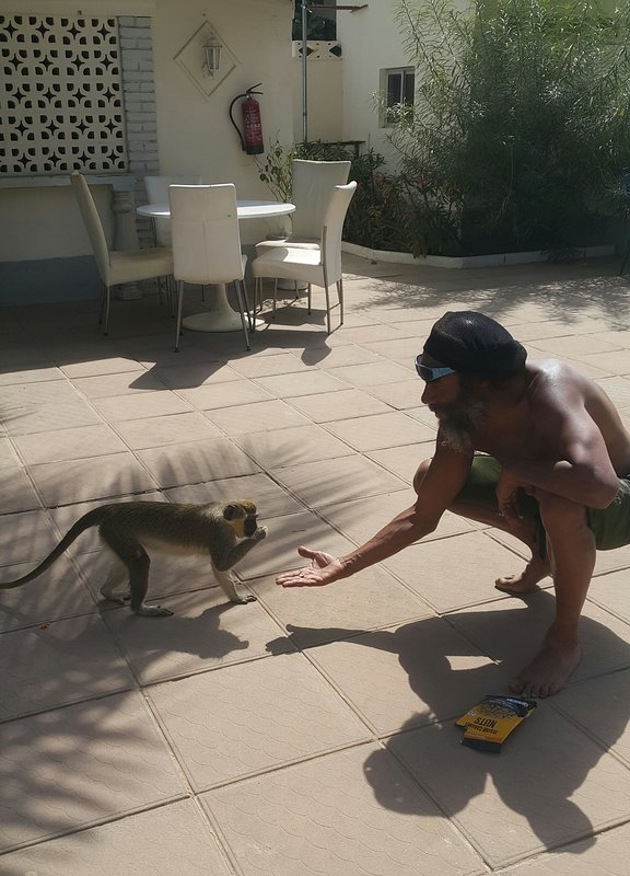 One of our favourite guests Shadow feeding the visiting Monkeys
